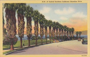Palm Trees Along A Typical California Shoreline Curteich