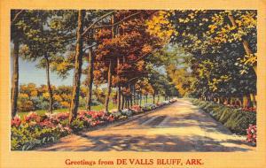 De Valls Bluff Arkansas~Flowers Along Gravel Road~Autumn Trees~1957 Linen PC
