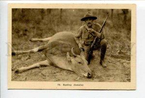 424031 VIETNAM Wild Bull hunting Vintage SAIGON postcard