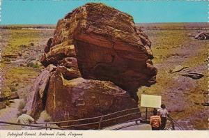 Arizona National Park Petrified Forest Newspaper Rock