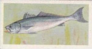 United Tobacco South Africa Vintage Trade Card African Fish 1937 No 2 Geelbek