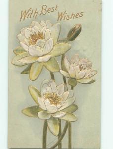 Divided-Back BEAUTIFUL FLOWERS SCENE Great Postcard AA3184