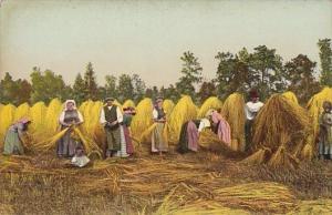 European Farmers In Hay Field