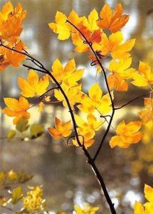 Autumn Branch Leaves Foto: Reinhard Siegel