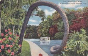 The Horse Shoe Palm At Beautiful Silver Springs Florida 1944