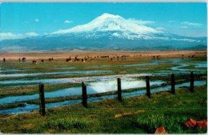 Mount Shasta Extinct Volcano California Postcard