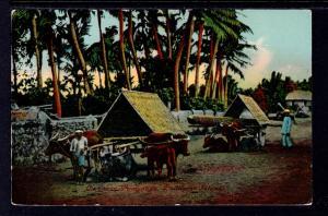 Ox Carts,Pampanga,Philippines