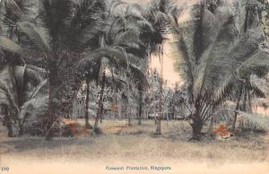 Singapore Old Vintage Antique Post Card Cocoanut Plantation Unused