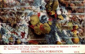 Bermuda Coral Formation