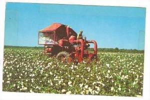 Mechanical Cotton Picker in the Great Southland, 40-60s