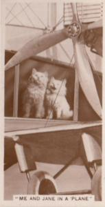 Cat Cats Stuck In A Plane German Antique Real Photo Cigarette Card