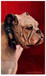 Dog , Bulldog