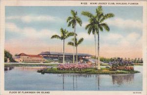 Florida Hialeah Flock Of Flamingos MIami Jockey Club 1936 Curteich