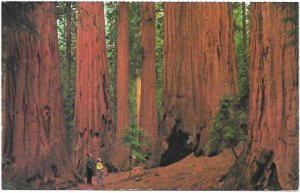 US California - Sequoia National Park, The House Group.  Unused.