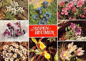 Alpen Blumen multiviews Edelweiss Einzian Eisgloeckchen Felsen Steinroesl