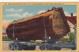 Trees Giant Log On Truck En Route To Mill 9 Ft 11 Inch Diameter 20 Feet Long ...
