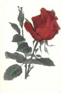 Post card garden rose