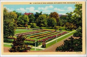 Rose Garden, Maplewood Park, Rochester NY