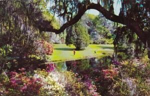 South Carolina Charleston Scene In Magnolia Gardens
