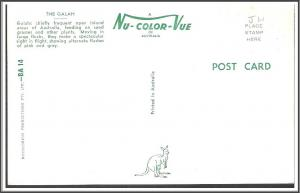Australia - The Galah Bird - [FG-094]