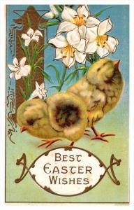 8843   EASTER  chicks