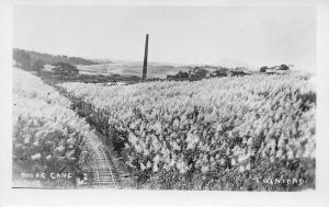 Sugar Cane Plantation, Trinidad, Early Real Photo Postcard, Unused