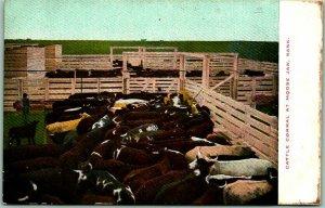 1910s MOOSE JAW, Saskatchewan Canada Postcard CATTLE CORRAL Ranch Scene Unused
