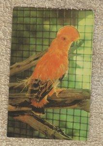 Cock O' The Rock Bird Post Card Busch Gardens VG Unused