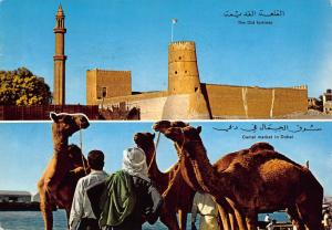 UAE Dubai Camel Market The Old Fortress Animals Postcard