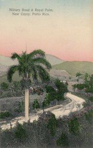 CAYEY , Porto Rico , 1908 ; Military & Royal Palm