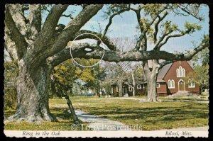 Ring in the Oak - Biloxi
