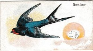 Trade Card Magical Soap British Birds & Their Eggs No. 15