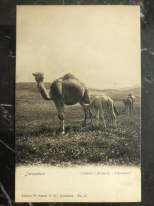 Mint Jerusalem Israel RPPC real picture Postcard Camels