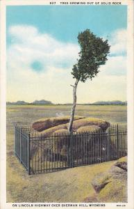 Tree Growing Out of Solid Rock on Lincoln Highway over Sherman Hill,  Wyoming...