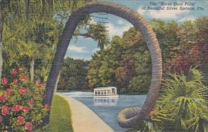 Florida Silver Springs Horse Shoe Palm 1956