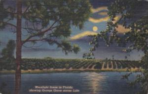 Florida Moonlight Scene Showing Orange Grove Across Lake Curteich