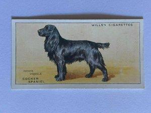 CIGARETTE CARD - WILLS DOGS #33 COCKER SPANIEL    (UU186)
