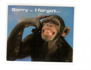 Peel Off Plasticized Postcard Coaster, Monkey, 'Sorry - I Forgot,
