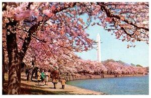 Blooming Cherry Trees Washington DC Vintage Postcard Postmark 1969