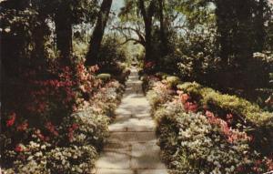 Alabama Mobile Bellingrath Gardens Path Lined With Camellias and Azaleas 1967