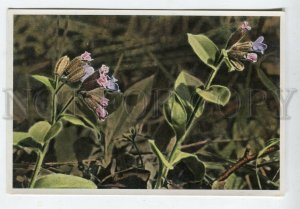 428068 Flower Pulmonaria officinalis Sammelwerk Tobacco Card w/ ADVERTISING