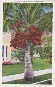 Coconuts Palm Beach Florida
