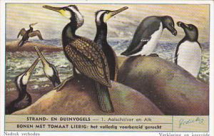 Liebig S1610 Birds Of Beaches and Dunes No 1 Aalscholver en Alk