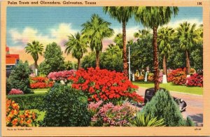 Postcard Palm Trees and Oleanders Flowers Galveston Texas Linen Unposted 1437