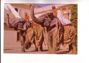Men Riding Decorated Elephants, City Palace, Jaipur, India