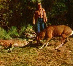 Vtg Postcard 1960s Horns Locked in Mortal Combat Greetings Cowboy Buck Deer