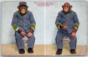 1900s New York Zoological Park BRONX ZOO Postcard Chimpanzee BALDY in Uniform