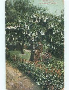 Divided-Back MONK SITTING UNDER DATURA TREE Postmarked Los Angeles CA F0038