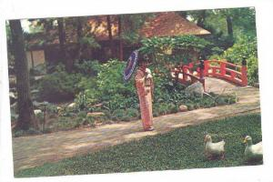 Descanso Gardens, Japanese Tea Garden, Japanese Girl In Kimono Admiring Ducks...