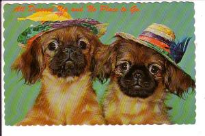 Two Puppies in Hats, All Dressed up, Greetings from Shelburne, Ontario, on Back